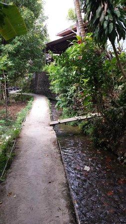 Puri Lumbung Cottages: environs  de l'hôtel vers les chutes