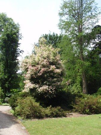 Arboretum Trompenburg: Conifeer doorkijkje.