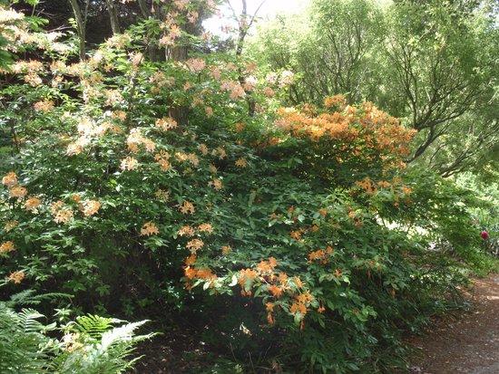 Arboretum Trompenburg: Rododendrons een van de vele.