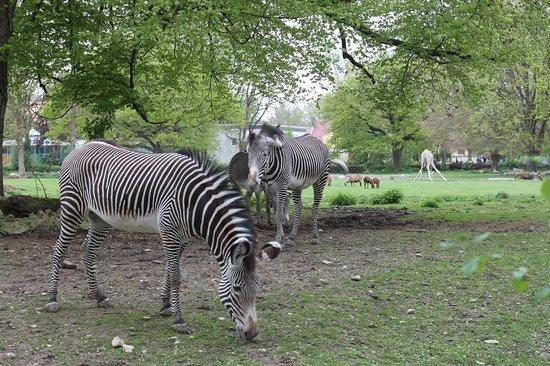 Augsburg Zoo: Зоопарк Аугсбурга 3
