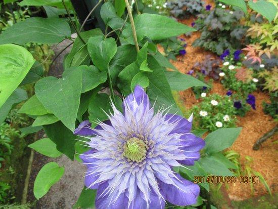 Pukekura Park: Flower in the fernery