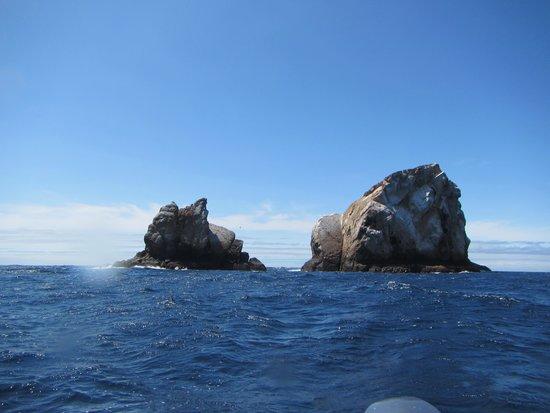 Macarron Scuba Diver