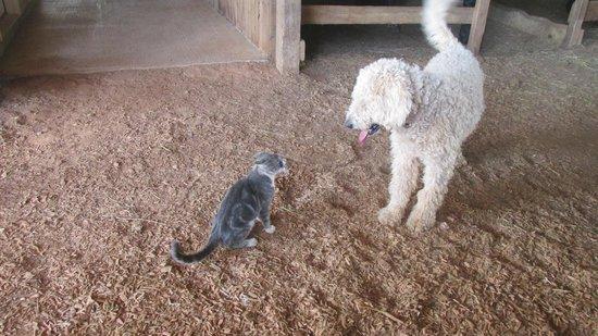 Sunburst Stables Adventure Park: Friendly cat and dog