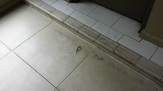 Novotel Suva Lami Bay: Grubby mess stayed three days and never cleaned once. This was in the main hallway.