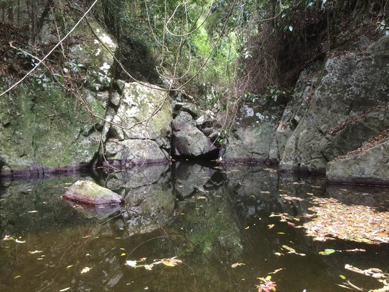 Lyola Pavilions in the Forest: Upstream private swimming hole
