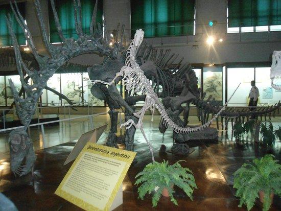 Museo Argentino de Ciencias Naturales Bernardino Rivadavia: Dinossauros