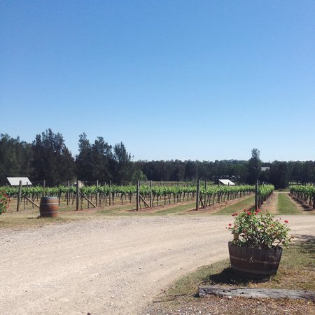 Carriages Boutique Hotel & Vineyard: The Carriages Vineyard