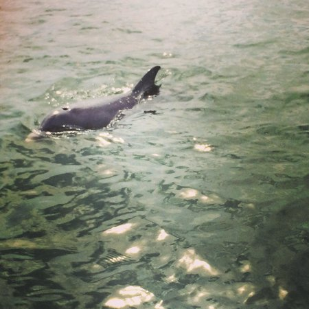 Marine Discovery Center: Dolphins :)