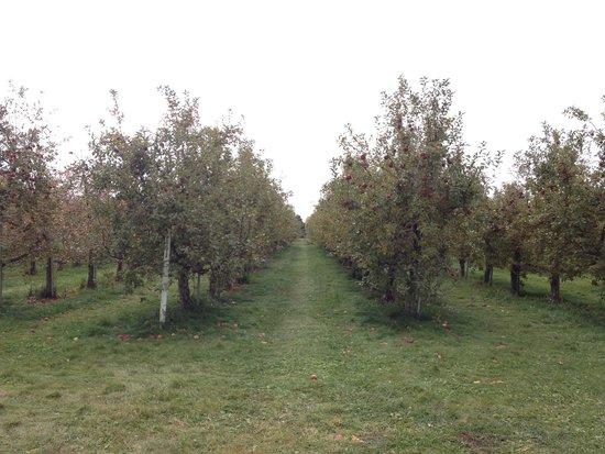 Belle Plaine, MN: Apple orchard