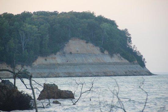 Calvert Cliffs State Park - Cliffs