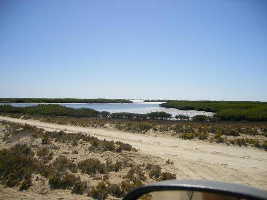 Baja Bocana B&B: Estero La Bocana -------good fishing, ask for Juanchi