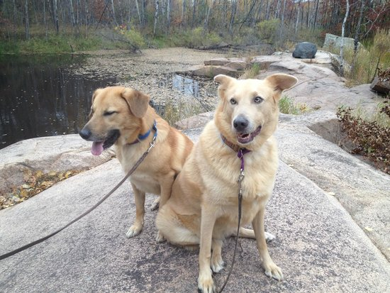 Quarry Park and Nature Preserve: The dogs loved it