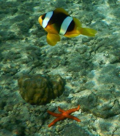 Aore Island Resort : Snorkellilng from beach