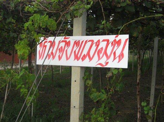 Nong Ya Plong, Thailand: ภาพ 6