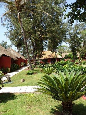 Jardin picture of royal horizon baobab somone tripadvisor for Baobab jardin