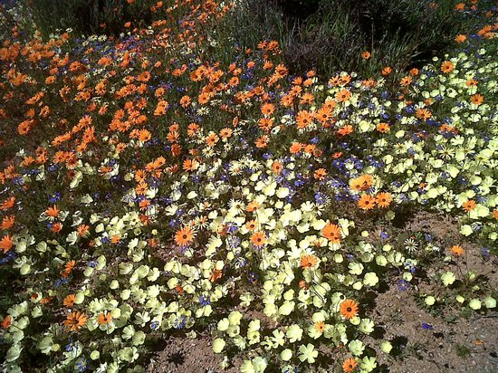 Namaqualand: Namaqua National Park