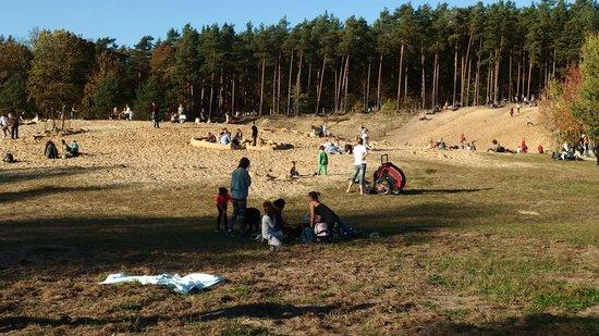 Grunewald Forest : Le dune della Grunewald