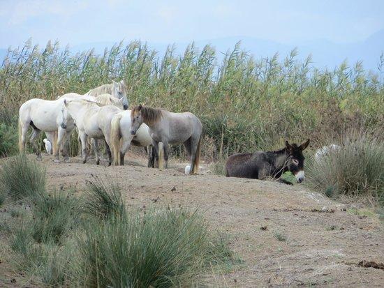 Parque natural s'Albufera de Mallorca: S'Albufera