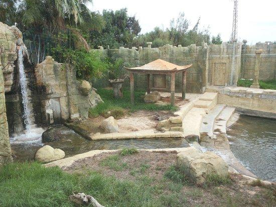 tigre - Picture of Rancho Texas Lanzarote Park, Puerto Del Carmen - TripAdvisor