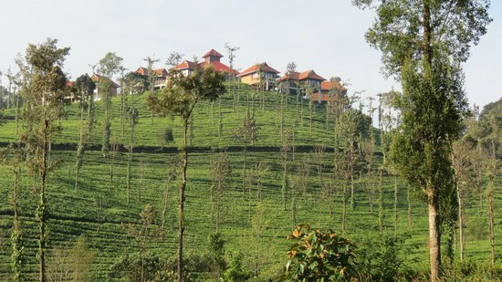 Majestic and beautiful picture of wild planet jungle - Plante jungle ...