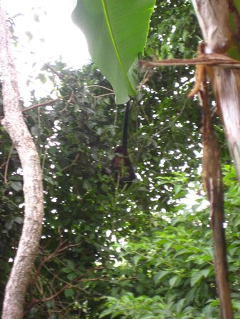 Luna Llena Hotel: A Monkey by our Patio!