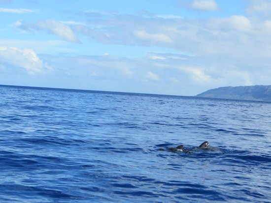 Wild Side Specialty Tours: Dolphins next to the boat