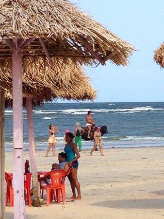 Praia do Pesqueiro : Búfalos para a foto!