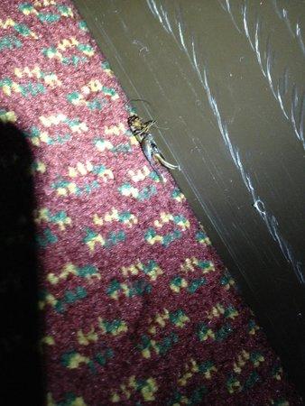 The Inn at Alamo RiverWalk Convention Center: Insecto muerto de hace tres temporadas