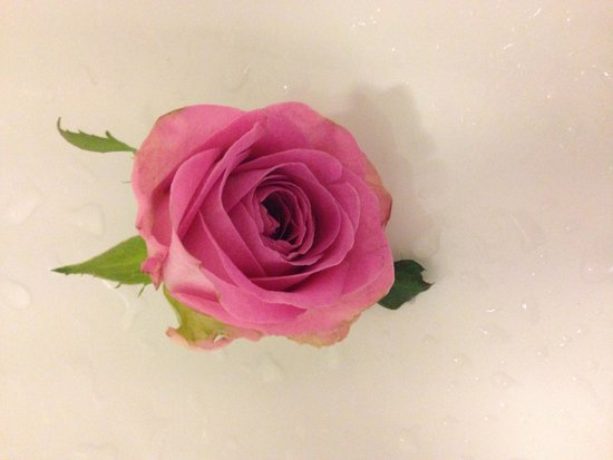 Hotel The Golden Wheel: One of our daily fresh roses