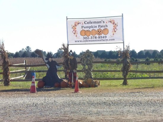 Coleman's Pumpkin Patch at the farm - Picture of Coleman's Christmas ...