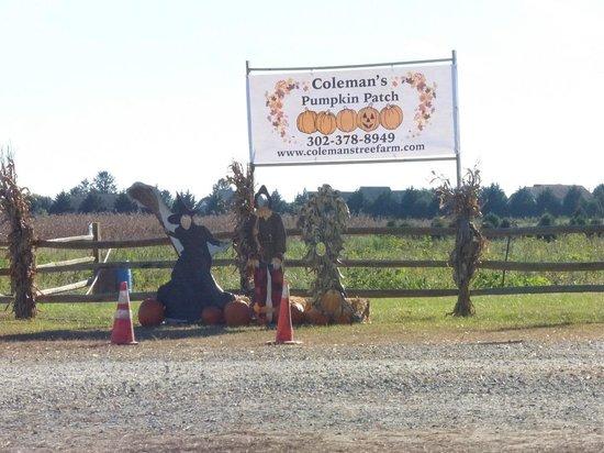Coleman's Christmas Tree Farm: Coleman's Pumpkin Patch at the farm - Coleman's Pumpkin Patch At The Farm - Picture Of Coleman's Christmas