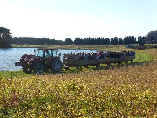 Hayride & Water at Coleman's Christmas Tree Farm - Picture of ...