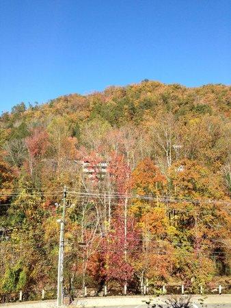 Hilton Garden Inn Gatlinburg Downtown : View from room 401(fall foliage)