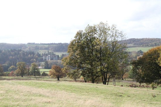Land Rover Experience Eastnor: Eastnor Castle and deer