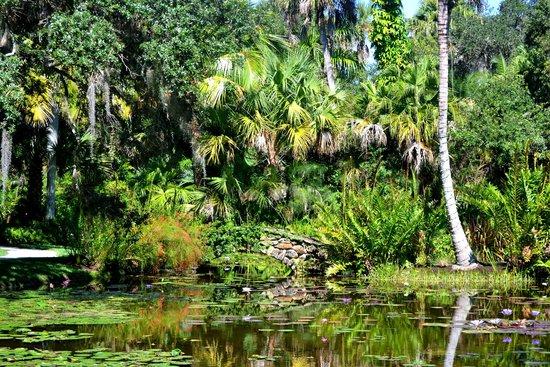 Congo rojo philodendron picture of mckee botanical - Mckee botanical gardens vero beach ...