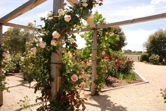 Highbank Winery Accommodation : roses at Highbank