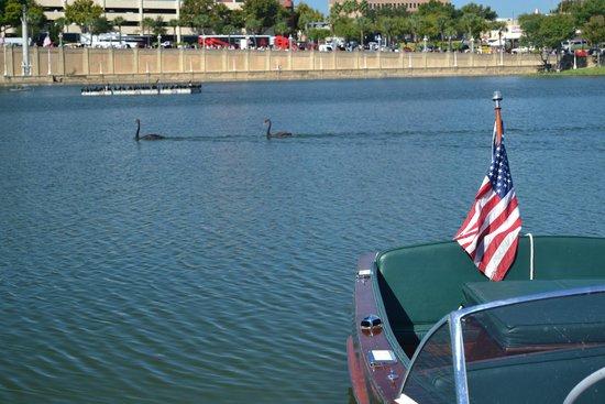 Lake Mirror: Swans on The Lake