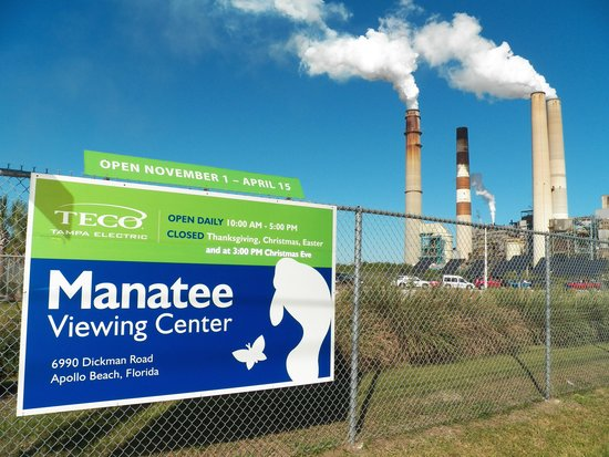 Manatee Viewing Area: Tampa Electric