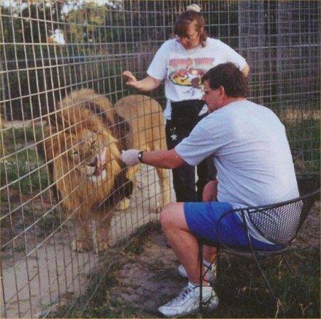 Big Cat Rescue : Feeding a lion by hand