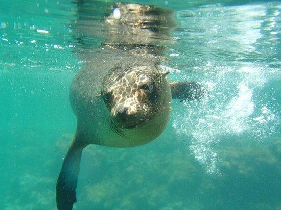 La Casa de Marita : Snorkeling next to a sea lion