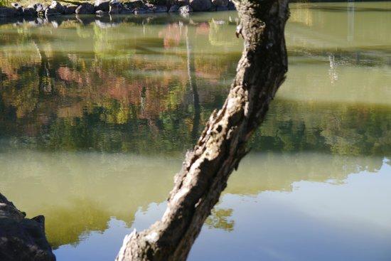 Kokeizan Eihoji Temple: 池に映える緑