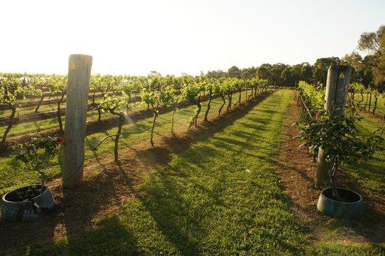 Hunter Valley: Vineyard