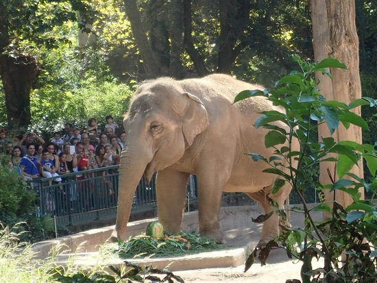 Elephant at the Zoo in Rome. - Picture of Bioparco, Rome