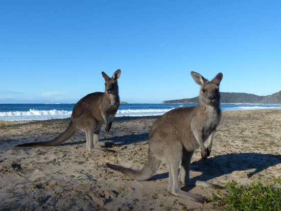 Sydney Wildlife Tours - Day Tours