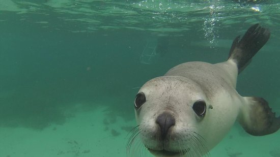 Baird Bay Ocean Eco Experience: sea lion
