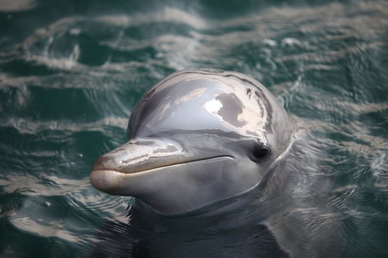 Dolphinarium, Cayo Naranjo: Beautiful
