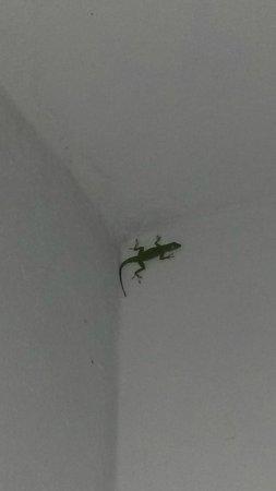 El Hotelito at the Rainforest Experience Farm: Our ghecko Gomez