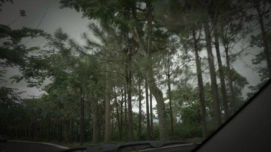 Crosswinds Resort Suites : more pines