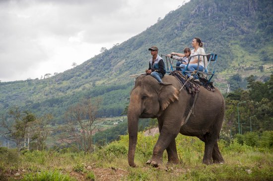Prenn Falls : Путешествие на слоне