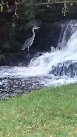 Glan Gwna Country Holiday Park: Just catching my breakfast.